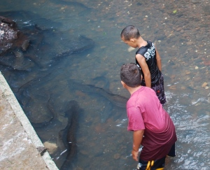 On Hiahine, Boys chased the blue-eyed eels in the village stream.  The eels are considered sacred and not eaten in French Polynesia.   ©Jean Janssen