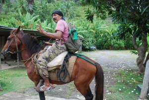 Along the roadside in Nuku Hiva, Marquesas, French Polynesia.  See saw horses everywhere on the island.©Jean Janssen
