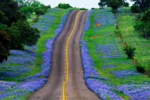 bluebonnet_highway