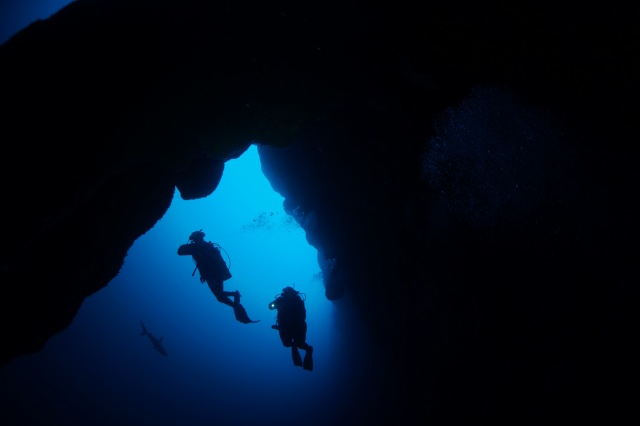 Some of our group's divers and a shark exploring the Blue Hole, Belize. ©Bill Fuqua