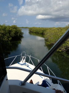 Passing through the mangroves.  Turneffe Atoll, Belize ©Jean Janssen