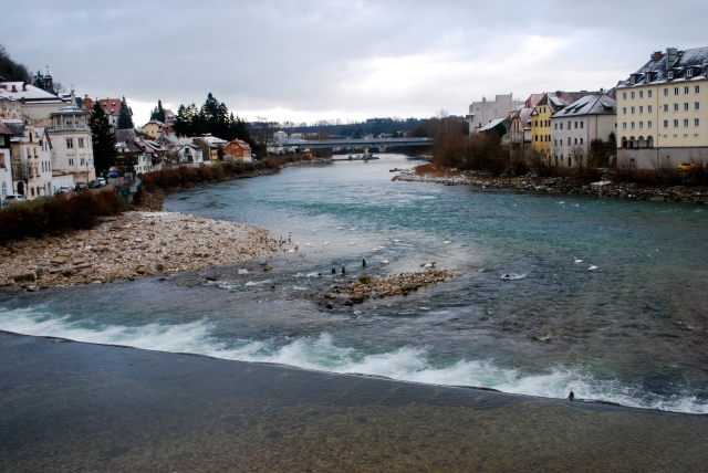 Where the two rivers meet in Steyr.  There were at least 20 swans on the water. ©Jean Janssen