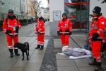 Rescue Dogs in Passau, Germany.  One of these guys was wrapped up for the cold. ©Jean Janssen