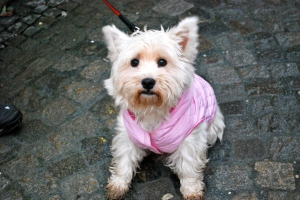 Our Westie, Peabody, would have loved this darling fraulein.  Passau, Germany ©Jean Janssen