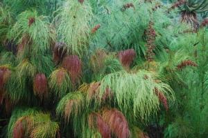 Native Grasses, South Africa. ©Jean Janssen