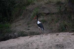 ©Jean Janssen Waterfowl, Ruaha National Park, Tanzania.