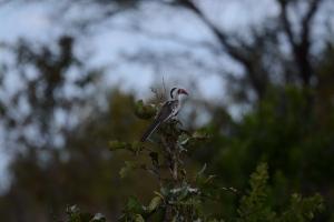 ©Jean Janssen Hornbill in Ruaha National Park, Tanzania