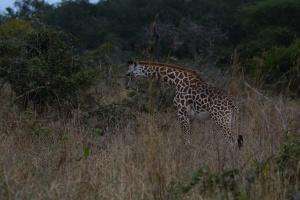 ©Jean Janssen Everyone was enjoying breakfast in Ruaha National Park, Tanzania.