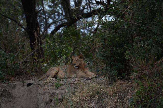 ©Jean Janssen On the upper bank of the Jongomero River, Tanzania.