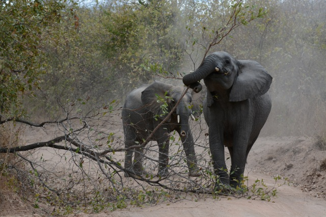 ©Jean Janssen Blocking the road Ruaha National Park, Tanzania