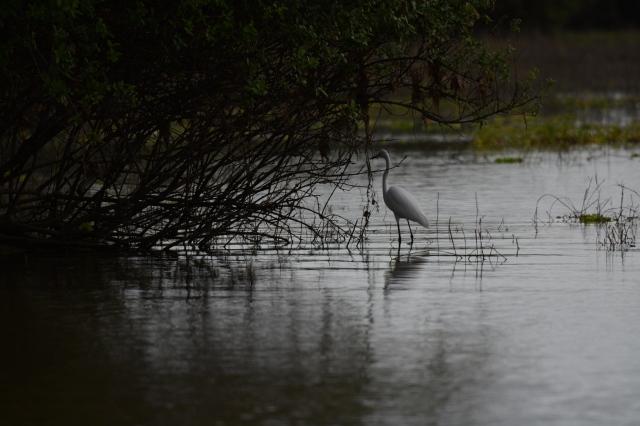 ©Jean Janssen Siwandu, Selous Game Reserve, Tanzania