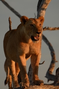 ©Jean Janssen Selous Game Reserve, Tanzania