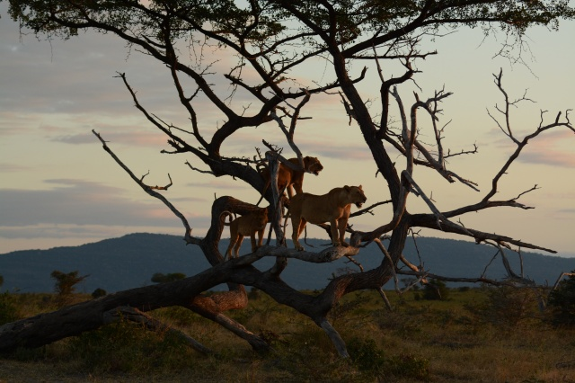 ©Jean Janssen Facing the setting sun. Selous Game Reserve, Tanzania