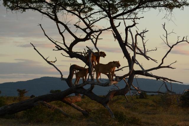 ©Jean Janssen Facing the setting sun. Selous Game Reserve, Tanzania