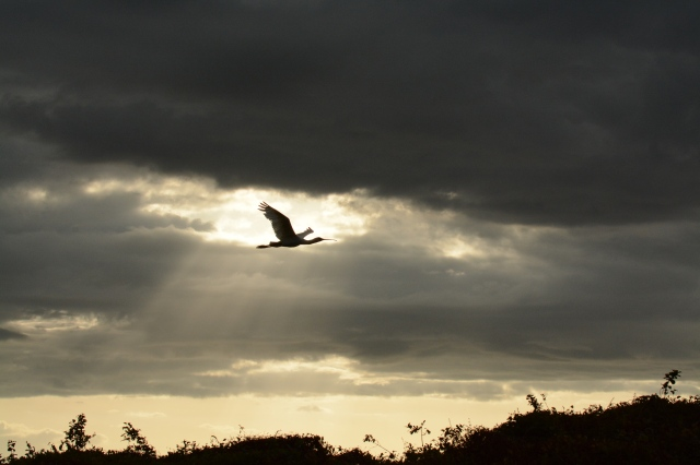 ©Jean Janssen I practiced trying to catch birds in flight against the sunset on this cloudy day.