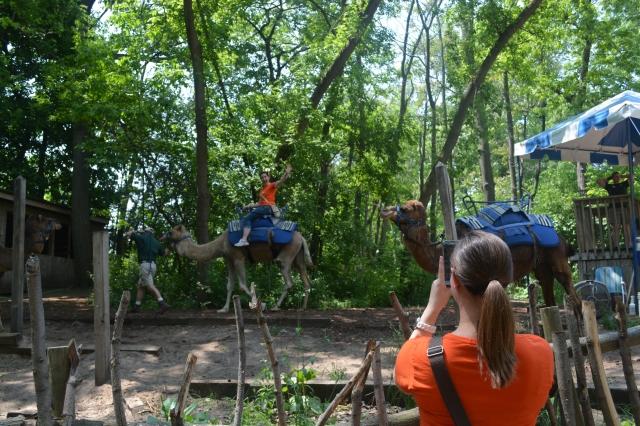 Camel rides at John Ball Zoo, Grand Rapids, Michigan ©Jean Janssen