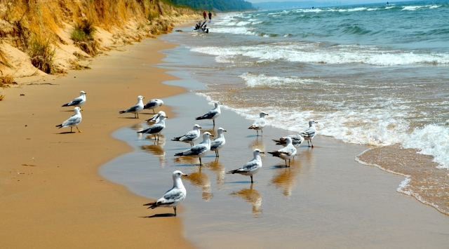 Beach walkers and sea gulls enjoying the shore of Lake Michigan at Hoffmaster State Park, near Muskegon, Michigan. ©Jean Janssen