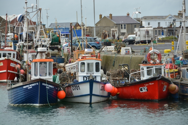 Fishing boats in the Howth marina, Dublin Bay, Ireland  ©Jean Janssen