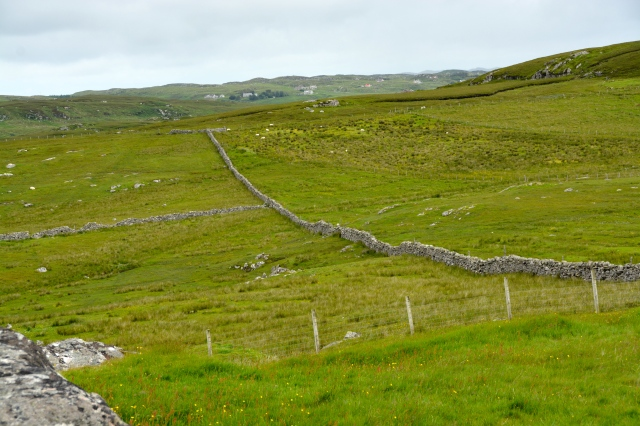 Isle of Lewis, Western Isles, Scotland.  Note the traditional stone fences supplemented with more modern fencing. ©Jean Janssen